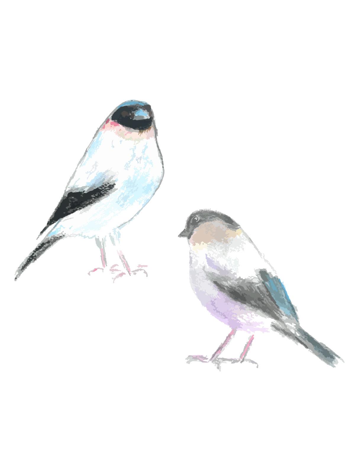 野鳥たちのイラストを制作